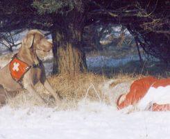 Rettungshundearbeit
