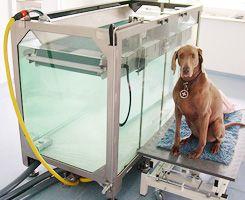 Unterwasser Therapie